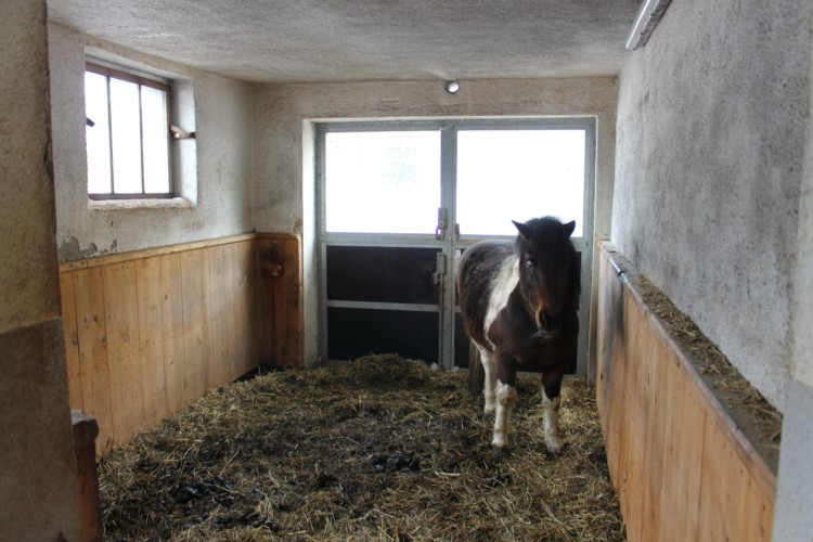 Hauseigener barrierefreier Stall mit Ponys am Gruppenhaus Simonyhof in Österreich.