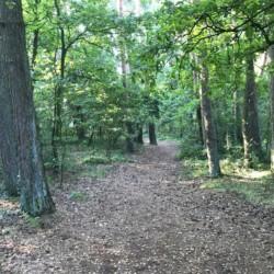 schöner Wald zum spielen am Kindergruppenhaus Freizeitheim Lehringen
