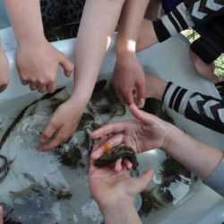 Fischen im dänischen Freizeitheim Boll´s Lejrskole auf der Insel.