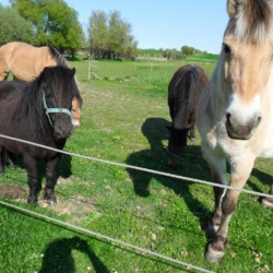 Die Pferde des Hausbesitzers Ristingegaard in Dänemark.