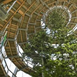 Barrierefreier Ausflug Baumkronenpfad am Freizeithaus Hotel Bayerischer Wald*** in Deutschland.