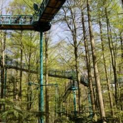 Baumkronenpfad im niederländsichen Drouwen