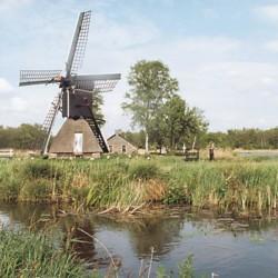 Die Umgebung des niederländischen Hauses Fredeshiem.