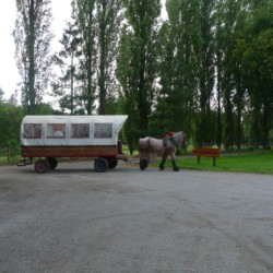 Planwagenfahrten am Gruppenhaus Zwaluwnest in den Niederlanden.