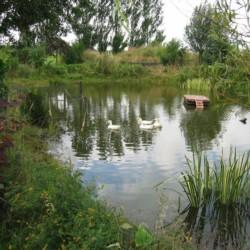 Teich am niederländischen Gruppenhaus Markestee