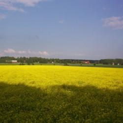 Umgebung vom schwedischen Freizeitheim Sörgården i Köping für Jugendfreizeiten