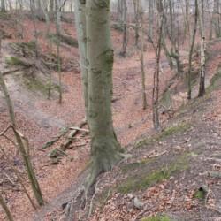 Das dänische Gruppenhaus Hulemosegård direkt am Wald.