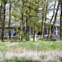 Waldstück am dänischen Gruppenhaus Rolandhytten