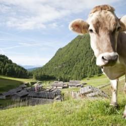 Berge, Wiesen, Dörfer und Natur am italienischen Gruppenhaus Plonerhof in Südtirol.