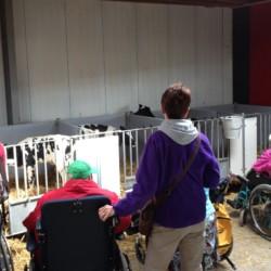 Kälber beim benachbarten Milchbauern am niederländischen Freizeithaus De Boerschop.